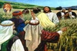 THỨ SÁU 18.07 - Tuần XV Thường Niên Is 38,1-6.21-22.7-8; Mt 12,1-8